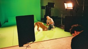 Animal handler, Mark Dumas, works with a young cougar on green screen set.