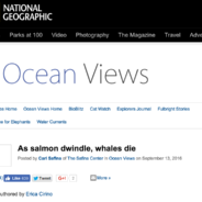There be no whales here….